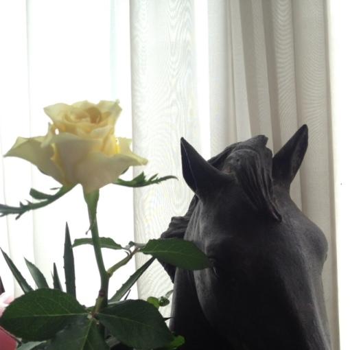 rosehorse