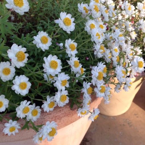 printempsprimavera