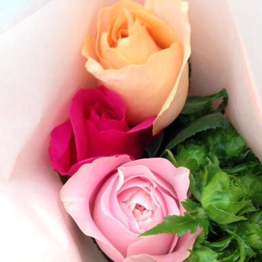roseroserose