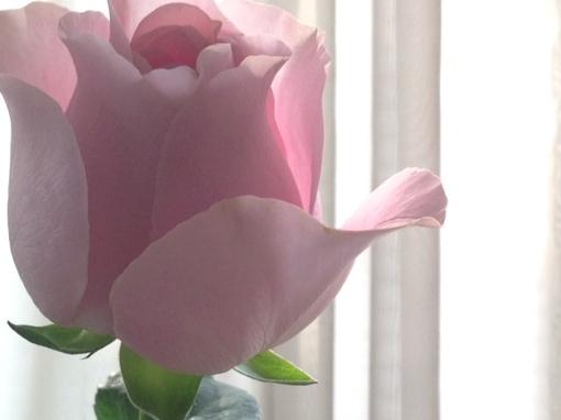roseesor