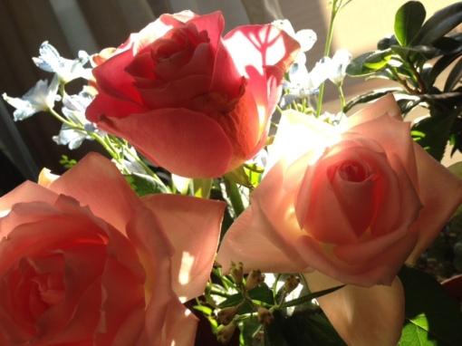 rose1110