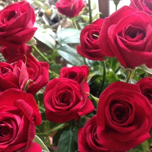 rosesor