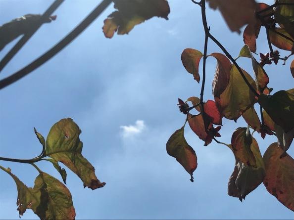 秋のアートレクチャーは、レンブラント。