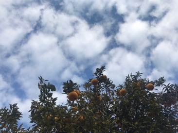 空そらソラのお茶会〜青空と雲のお話。